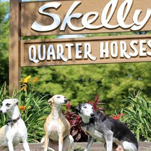 Whippets We Raise and Sell