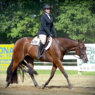 """Hot N Fabulous  """"Ari"""" is a bay mare by Hot N Blazing and out of Congress Champion and NSBA World and Reserve World Champion , Lukes Fabulous (Luke at Me)"""
