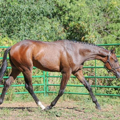 """Sold congratulations Jordan Coil  2019 """"Inspiring Details"""" brown gelding by Naturally Inspiring out of a last detail mare"""