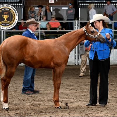 2020 Oh So Premo by PF Premo out of MTK Bob Barann Had a great time at the Breeders Halter Futurity great run show like always PF Premo colt OH SO PREMO out of MTK Bob Barann he picked up checks in the following classes Open Jr weanling Stallions  DIY Weanling Stallions Amateur Jr Stallions